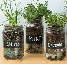 Shares Buying fresh herbs at the grocery store can get expensive. You get a small amount for $2-$4 and the quality usually isn't that great. You can save a lot of money by having your own DIY herb garden. Herbs are easy to take care of and don't require much space. The seedlings, potting soil and pots are very inexpensive too. …