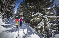 Copyright: Saalbach-Hinterglemm Austria, Snow, Winter, Outdoor, Outdoors, Outdoor Games, Outdoor Living, Bud, Let It Snow