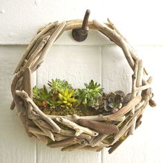 Look what's washed ashore. Capturing the beauty of the sea, this twist on the traditional hanging basket planter is crafted from driftwood collected on Oregon and California beaches. It's easy to hang and beautifully cradles a small bed of succulents. Basket Planters, Outdoor Planters, Hanging Baskets, Outdoor Gardens, Indoor Gardening, Hanging Planters, Wall Planters, Concrete Planters, Vegetable Gardening