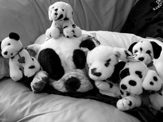 Big softy: A black and white pooch cosies up with some lookalike toys