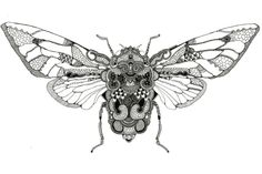 Loads of Zentangle animals for you to draw inspiration from, and then make your own. Including links for animal outlines and zentangle pattern ideas. Doodles Zentangles, Animal Outline, Bug Art, Insect Art, Insect Jewelry, A Level Art, Bugs And Insects, Art Plastique, Pattern Art