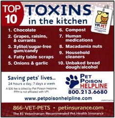 Toxic Human Foods to Avoid Giving Your Dog....good info on this site