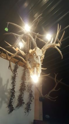 This incredible, one of a kind antler chandelier is made from four 100% REAL and ethically harvested white tail deer skulls. It is 62 tall and 39 wide.