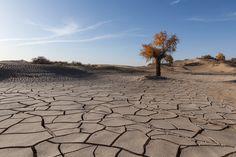 https://flic.kr/p/dvXeRe | Taklimakan Desert | 塔克拉玛干沙漠