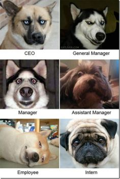Our new organizational chart!