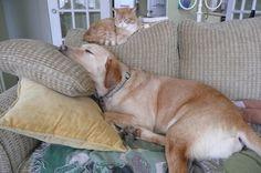 Archie, Luxury Lifestyle, Friends, Dogs, Animals, Animales, Amigos, Animaux, Boyfriends