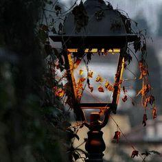 Black Autumn ~ JadasGypsySoul <3
