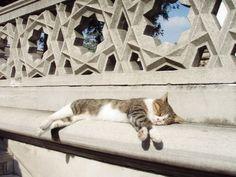 <3 Istanbul kitties