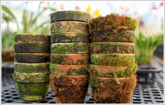 Moss pot garden needs no plants. Potting Sheds, Potting Benches, Pot Plante, Terracota, Garden Pots, Potted Garden, Garden Structures, Clay Pots, Garden Styles