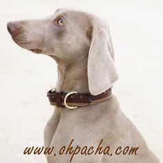 Histoire d'Amour ❤  Collier pour chien Trinidad avec bracelet coordonné pour le maître. 8 tailles disponibles du XXS au 3XL à partir de 35 €. Boutique en ligne : http://www.ohpacha.com/46-collier-pour-chien