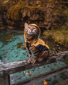 Suki in seinem Regenmantel – – les chat - Animal photography Cute Baby Animals, Animals And Pets, Funny Animals, Happy Animals, Nature Animals, Wild Animals, Funny Animal Photos, Animal Pictures, Funny Photos