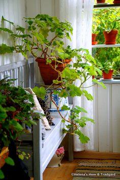 Vinterförvaring av växter i kruka