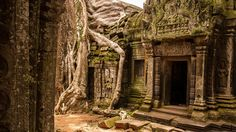 Ta Prohm in Angkor, Cambodia -  Ta Prohm is an astonishing merger between nature and architecture in the Cambodian jungle. Constructed in 1186, the temple was neglected over the centuries, and the jungle wasted no time devouring it. It's popularity has soared in recent years, partly due its appearance in the movie Lara Croft: Tomb Raider.