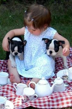 toddler with two boston terriers! / I ♥ Boston Terriers. Boston Terriers, Boston Terrier Love, Terrier Puppies, Animals For Kids, Baby Animals, Cute Animals, Jiff Pom, Baby Kind, Cute Kids