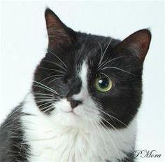 Shadow Cats & Blossom - Helping Commumity Cats in Need  #tnr #shadowcats #feralcats #cats