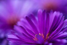 Come l'ape raccoglie il succo dei fiori senza danneggiarne colore e profumo, così il saggio dimori nel mondo.  Siddhārtha Gautama Buddha