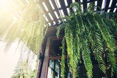 2018 gardening 28 pinterest. Black Bedroom Furniture Sets. Home Design Ideas