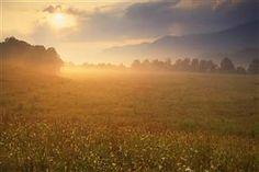 Nature Morning Fog Photo