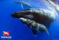 http://www.facebook.com/pages/Protection-des-mers-et-des-animaux-marins/102549889800913