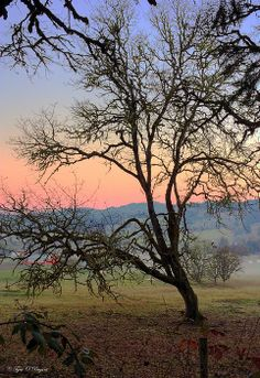 Translucent Stillness~  #photography #sunset #tree #nature #country #farm #pink (by Tyra O'Bryant)