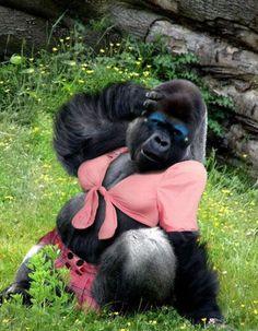 ·more animals funny gorilla female