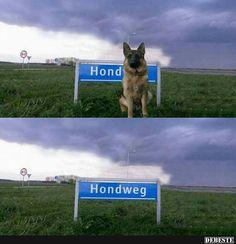 Hondweg.. | Lustige Bilder, Sprüche, Witze, echt lustig