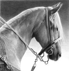 "Palomino Ready by Mary Ross Buchholz ~ 12"" x 12"" Horse drawing"