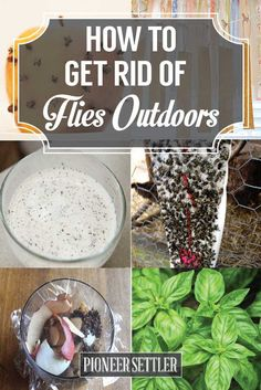 How-to-Get-Rid-of-Flies-Outdoors 1