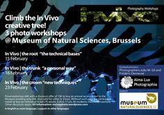 Climb the In Vivo creative tree! On the way to Brussels, again. In the absolutely fabulous Museum of Natural Sciences. * Trepar à árvore criativa dos In Vivo. A caminho de Bruxelas, outra vez. No absolutamente fabuloso Museu de Ciências Naturais.