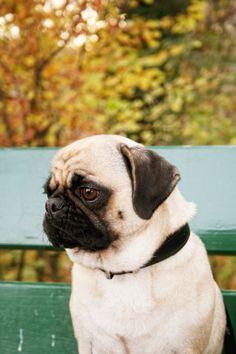 Why so sad Lola :-(