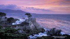 Lone Cypress, Near Carmel, California
