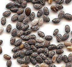Pravděpodobně jste o chia semínkách již něco slyšeli. Nicméně připravit si z nich výjimečné recepty neumí jen tak někdo, k tomu je potřeba plno inspirace. Pojďme si o chia semínkách...