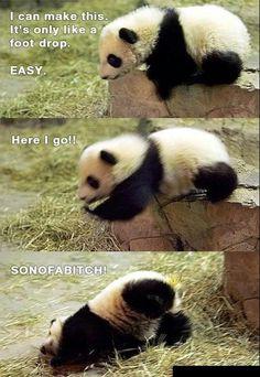 oh pandas. I think I was a paNda in my pastlife Niedlicher Panda, Panda Funny, Panda Love, Cute Panda, Panda Bears, Hello Panda, Panda Gif, Polar Bears, Bored Panda