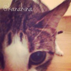 #cat #kelly