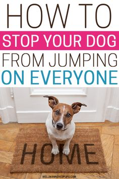 How to Stop Your Dog from Jumping Up On You and Others - Well Mannered Pups Crate Training, Dog Training Tips, Stop Dog Barking, Dog Care Tips, Pet Gate, Frugal Living Tips, Mom Advice, You Really, Dog Toys