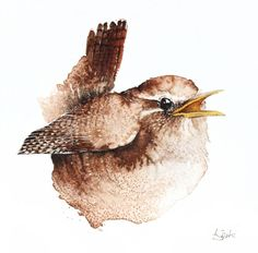 ARTFINDER: Wren-Original watercolors painting by Karolina Kijak - Original watercolors of Wren Paper 300g  100% cotton, high quality pigments size 18x18cm  Follow me on facebook: https://www.facebook.com/kijakwatercolors