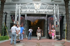 Audubon Insectarium, New Orleans