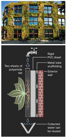 Living Wall - vertical gardens. An example of the type of sustainable activity that could feature on Science Central #verticalgardens
