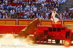 torodigital: Desafío ganadero de muchos quilates en Pamplona