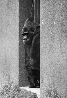 San Francisco zoo animals