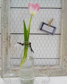 #tulppaani #kevät #kukka #ilmoitustaulu #lasipullo #liisako