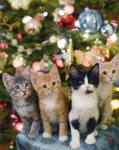 christmas kittens (had to pin due to cuteness!)