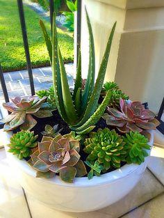 Succulent Planter Diy, Succulent Landscaping, Succulent Gardening, Cacti And Succulents, Planting Succulents, Planting Flowers, Succulent Arrangements, House Plants Decor, Plant Decor