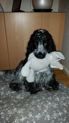 Toby 9 maanden en nog steeds met zijn ollie
