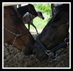 *-* Horses, Animals, Animales, Animaux, Animal, Animais, Horse