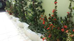 Jardim entrada da casa