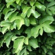- piante da interno