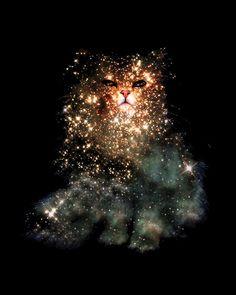 Zippora Lux - Celestial Cats