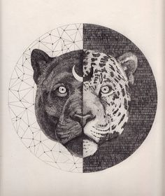 Leopard  420 x 297 mm, graphite on paper  Peter Carrington