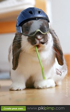 Silly rabbit =)